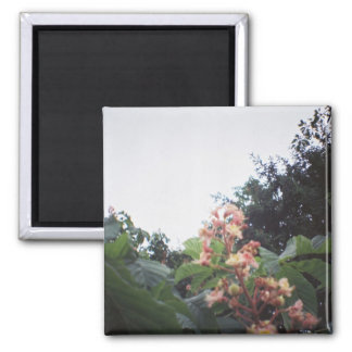 Horse Chestnut Blossom Flowers 2 Inch Square Magnet