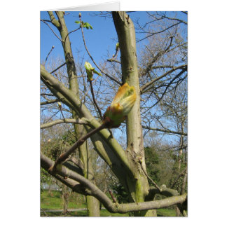 Horse Chestnut bud Greeting Card