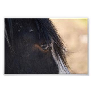Horse Close-up Photographic Print