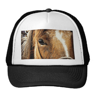Horse Close Up Trucker Hat