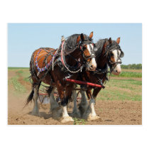Horse Clydesdale Farming Photo Postcard