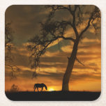 """Horse Coasters<br><div class=""""desc"""">Beautiful fine art horse photography coasters.  This image of a horse,  oak tree and sunrise was taken on the Central Coast of California,  San Luis Obispo area,  north county in a little town called Creston.  It is known for it&#39;s horse country,  wide open spaces and beautiful heritage oak trees.</div>"""