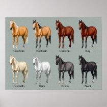 Horse Coat Colors Poster