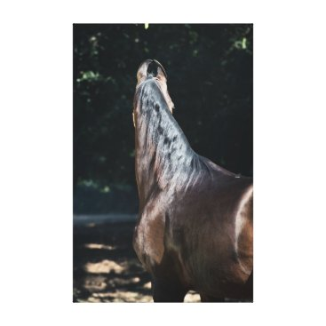 Beach Themed horse collection. Marwari Canvas Print