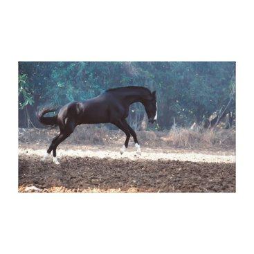 Beach Themed horse collection. Marwari. india Canvas Print
