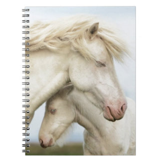 Horse collection notebook