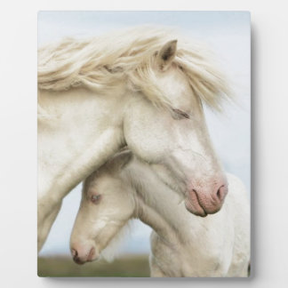 Horse collection photo plaques
