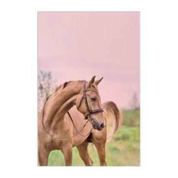Beach Themed horse collection. sportive acrylic print