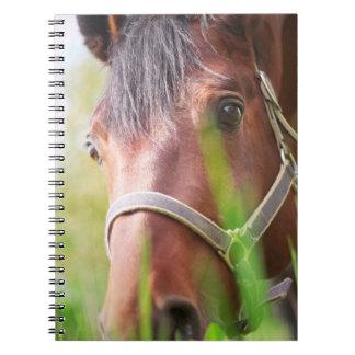 horse collection. spring notebook