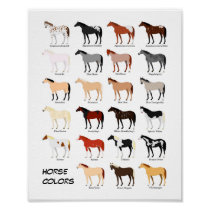 horse color chart poster