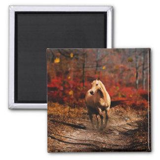 Horse Colour 2 Inch Square Magnet