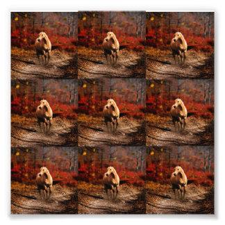 Horse Colour Photo Print