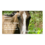 Horse Colt Business Cards