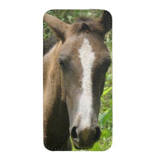 Horse Colt