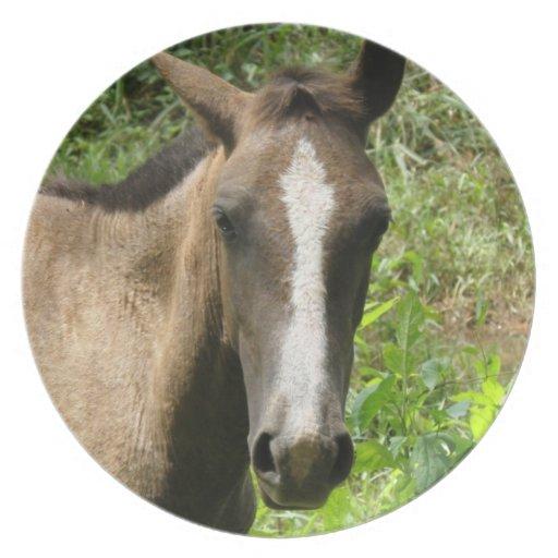 Horse Colt  Plate