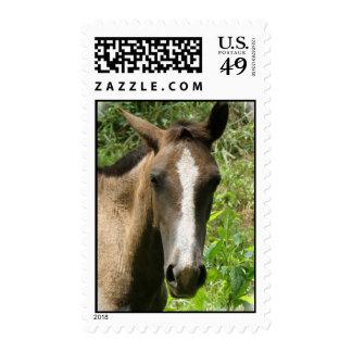 Horse Colt  Postage Stamp
