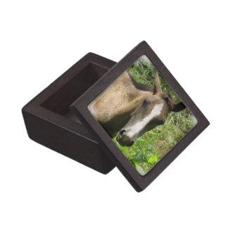 Horse Colt Premium Gift Box