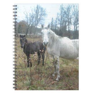 Horse & Colt Spiral Note Book