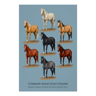 Horse Common Solid Coat Colors Chart