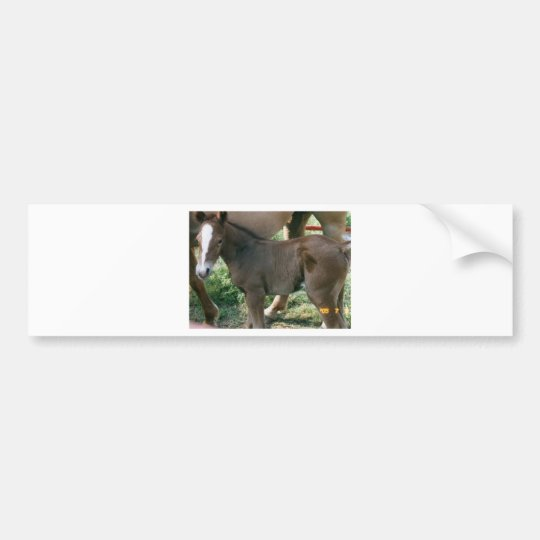 Horse Country Bumper Sticker