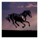 Horse dance at sunset posters