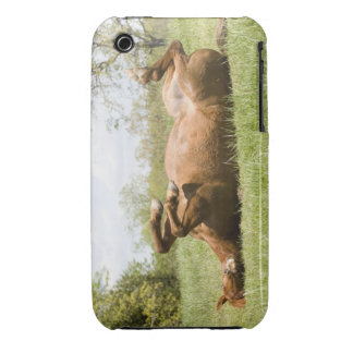 Horse Dancing on it's Back for Ipod Case/Cover iPhone 3 Case-Mate Cases