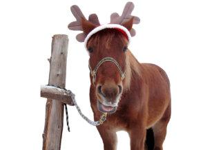 horse deer christmas horse funny horse holiday card - Christmas Horse