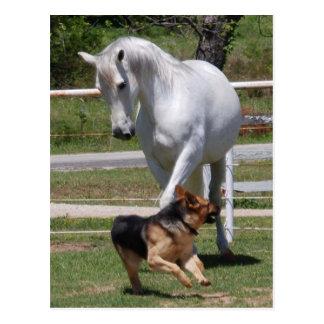 HORSE & DOG PLAY POSTCARD
