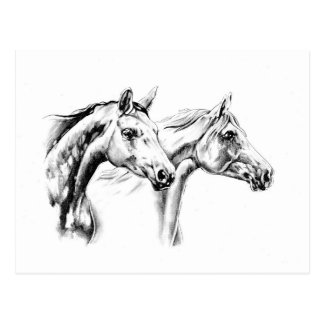 Horse drawing sketch art handmade postcard