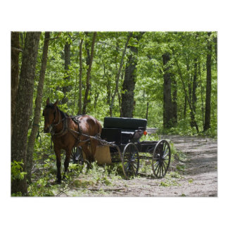 Horse drawn carriage tethered in woods poster