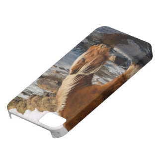 horse drinks in a mountain stream with ice  & snow iPhone 5 cover