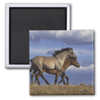Horse Duo 2 Inch Square Magnet