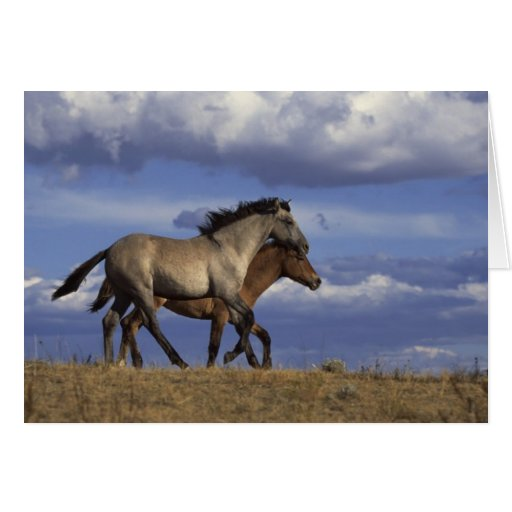 Horse Duo Greeting Card