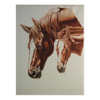Horse Duo Postcard