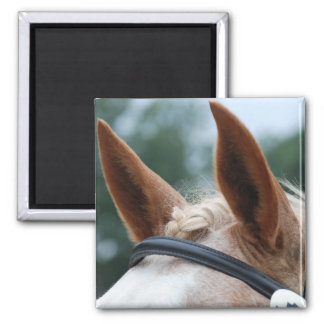 horse ears 2 inch square magnet
