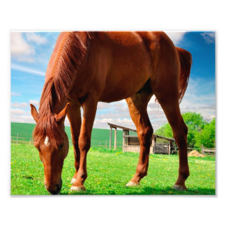 horse eating grass photo print