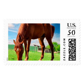 horse eating grass postage