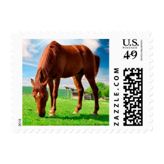 horse eating grass postage stamp