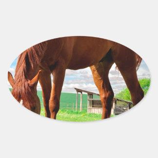 horse eating grass oval sticker