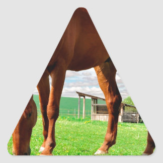 horse eating grass triangle sticker