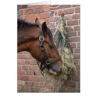 Horse eating hay greeting card