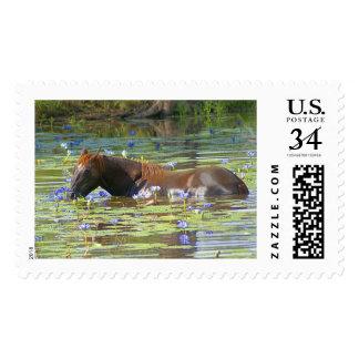 Horse eating in the lake, Australia, Large Photo Postage