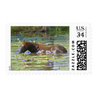 Horse eating in the lake, Australia, Medium Photo Postage
