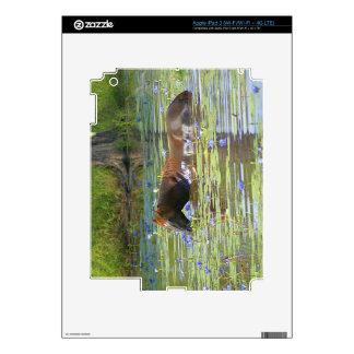 Horse eating in the lake, Australia, Photo iPad 3 Decals