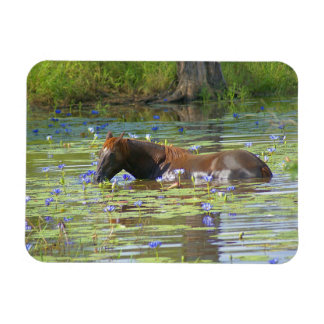 Horse eating in the lake, Australia, Photo Magnet