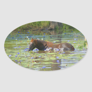 Horse eating in the lake, Australia, Photo Oval Sticker