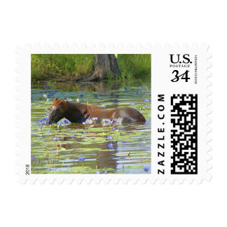 Horse eating in the lake, Australia, Small Photo Postage
