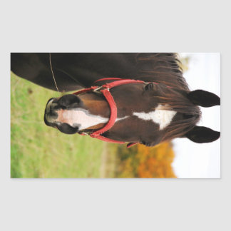 Horse Eating Rectangular Sticker
