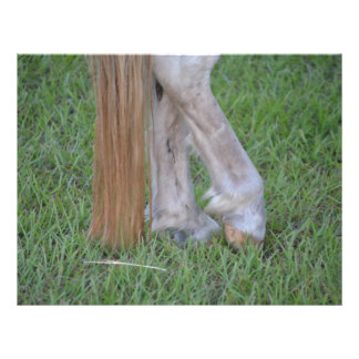horse equine hind hooves one resting tail flyers