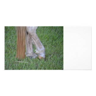 horse equine hind hooves one resting tail photo card template